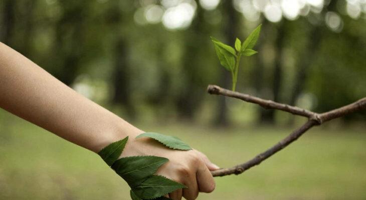 کمک به محیط زیست با کاتالوگها و بروشورهای دیجیتال
